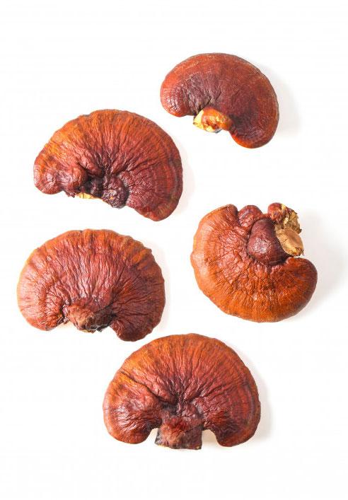 کنترل دیابت با قارچ گانودرما,درمان دیابت با قارچ گانودرما,قهوه های گانودرما,گانودرما دکتر بیز