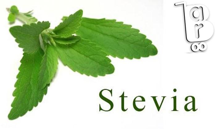 خرید استویا، شکر استویا از کجا بخریم، قیمت گیاه استویا، قیمت هر کیلو شکر استویا، کاشت گیاه استویا، گیاه استویا در گیلان، محصولات استویا